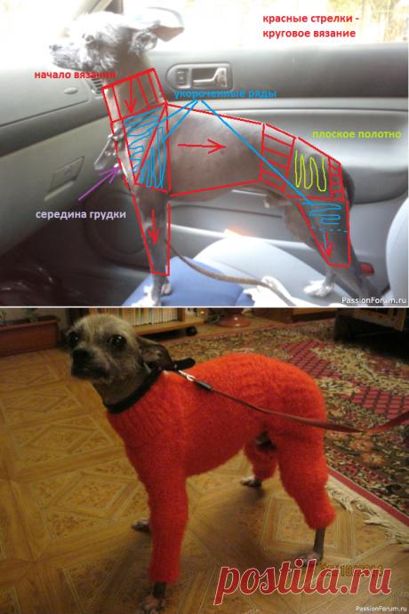 Ищу описание свитерков для собачек! | Вязание спицами для начинающих