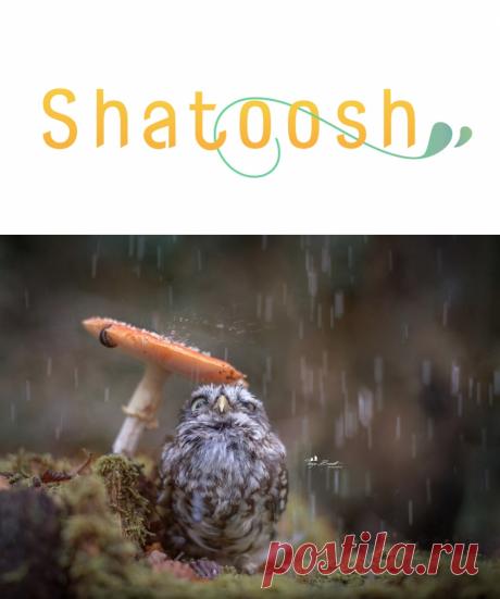 Помоги себе сам | Shatoosh