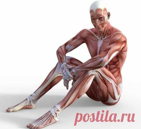 4 упражнения, которые не навредят суставам и добавят здоровья После 50 лет нужно подбирать упражнения, которые будут щадить сердце и суставы, особенно, когда человек не имеет хорошей физической подготовки. Для этой категории людей подходят лёгкие упражнения, которые тонизируют, разминают и растягивают тело. Предлагаем вашему вниманию четыре упражнения, которые лучше выполнять с утра.