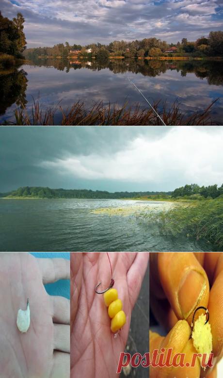 Что делать если рыба не клюет? 3 совета как улчшить клев | Охота и Рыбалка | Яндекс Дзен
