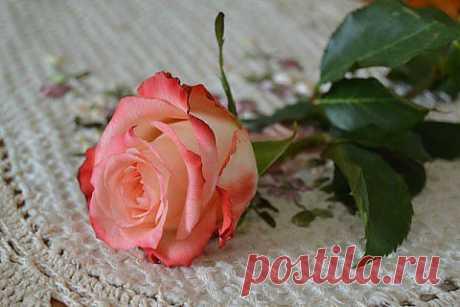 ИСТОЧНИК СЧАСТЬЯ | Поэзия