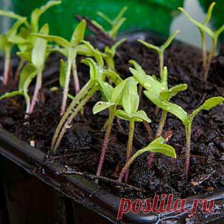 Усадьба | Огородник : Как повысить всхожесть семян?