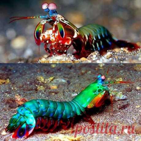 40 krasivennyh de los animales del colores inesperado
