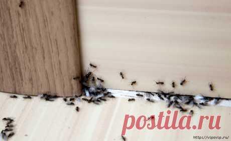 Как избавиться от муравьев навсегда