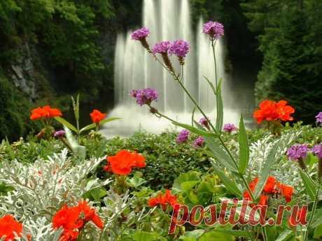 «Настоящий райский сад» — картка користувача juleeandreykina у Яндекс.Колекціях