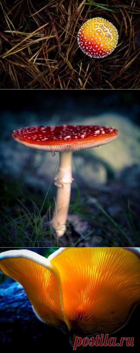 Ядовитый шарм. Красота диких грибов.