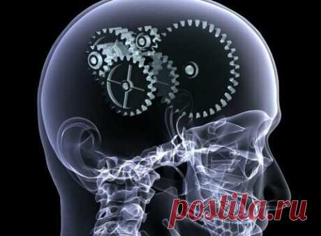 Как развивать свой мозг?   Вопрос дня.   Яндекс Дзен
