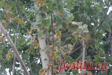 Все вредители сада – фото, названия, описания и меры борьбы - Садоводка