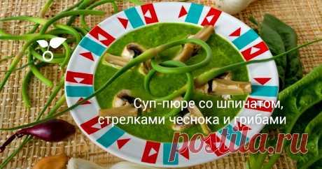 Суп-пюре со шпинатом, стрелками чеснока и грибами Рецепт этого густого крем-образного супа-пюре со шпинатом, стрелками чеснока и грибами подойдёт для вегетарианского стола и диетического питания. Свежие шампиньоны можно заменить консервированными, или, когда появятся первые лесные грибы, именно ими.