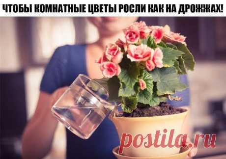 Всего 7 приемов, чтобы комнатные цветы росли как на дрожжах!!!  Возьмите на замутку! При выборе комнатного растения мы всегда обращаем внимание на внешний вид листьев и цветов, форму. Но каждое растение имеет свою индивидуальную энергетику, влияя на состояние человека. Красивое комнатное растение — это, прежде всего правильный уход и условия содержания. Даже небольшие погрешности в уходе могут привести к появлению коричневых сухих пятен или высыханию кончиков или краев лис...