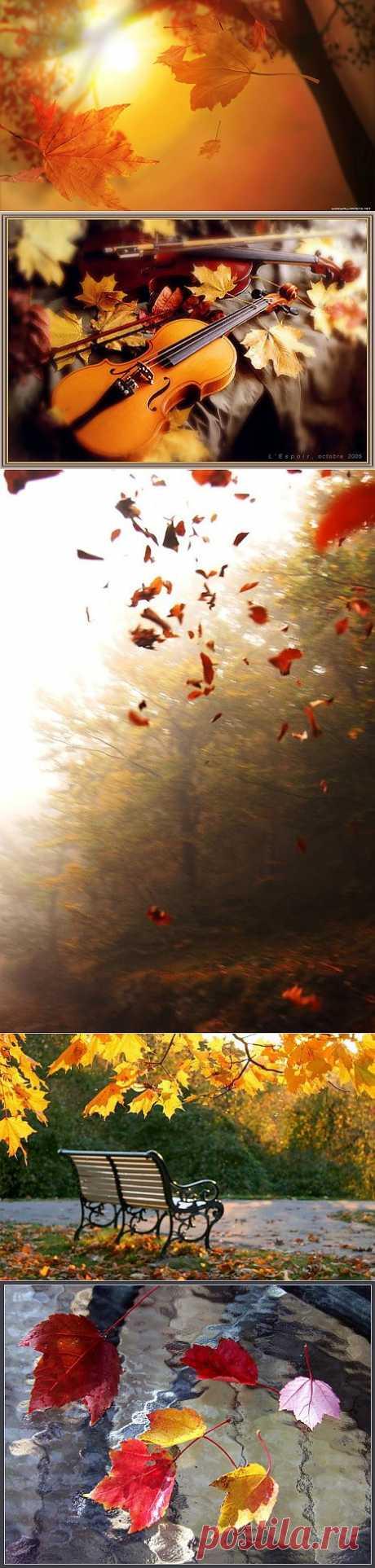 Осенняя скрипка – прозрачная мука прощального взмаха листвы...