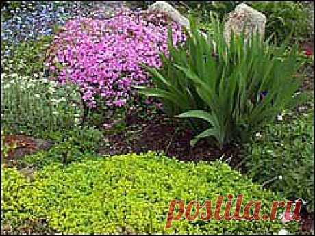 Растения - коврики