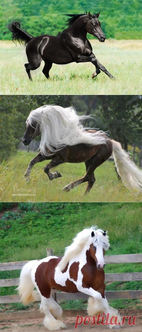 Лошади, от красоты которых дух захватывает — Наука и жизнь