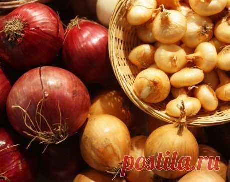 Algunos consejos de cultivación de la cebolla de los horticultores versados.
