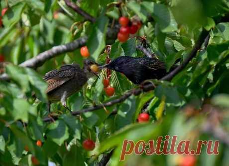 Простой народный способ защитить Ягодные кустарники от нашествия Птиц, которым пользовались еще наши Бабушки | Моя успешная дача | Яндекс Дзен