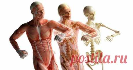 10 упражнений для фасций Научившись влиять на фасцию, можно решить три актуальные женские проблемы — лишние килограммы, первые морщины и хрупкие суставы. Но недавние исследования показали, что с помощью некоторых упражнений можно улучшить состояние самой малоизученной ткани в человеческом теле — фасциальной...