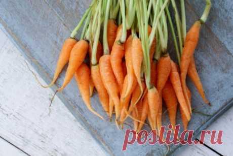 Мелкая морковь: почему такая выросла и куда ее девать | Морковь, свекла, редис (Огород.ru)