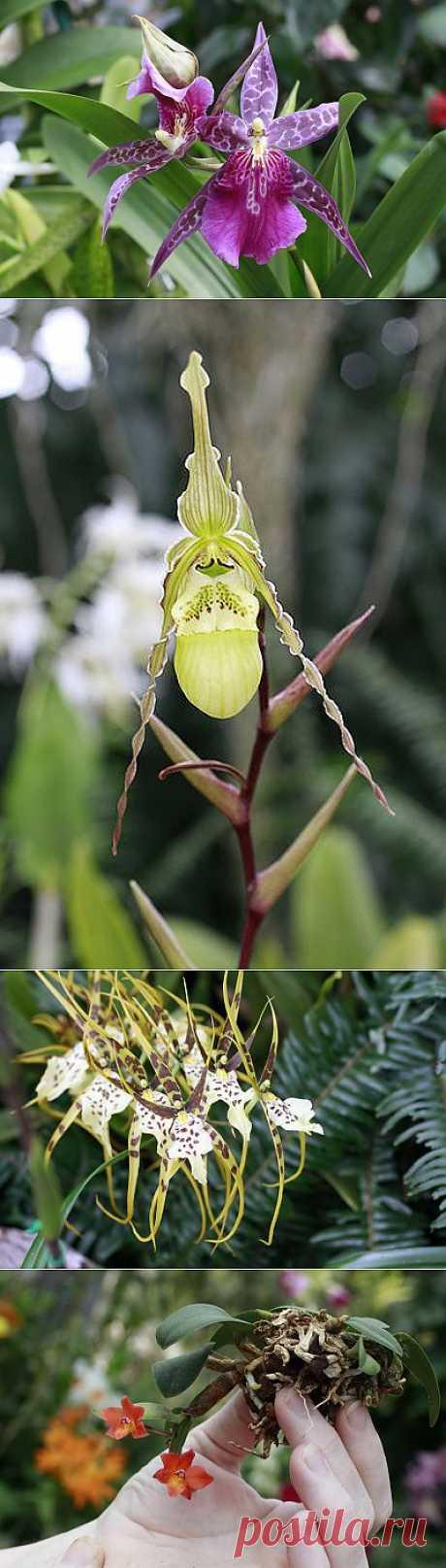 Выставка орхидей в США | САД НА ПОДОКОННИКЕ