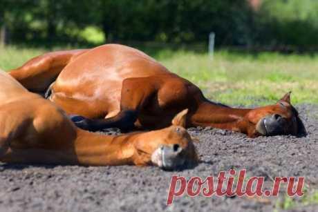 Милые животные, которые спят где попало и как попало | Strike | Яндекс Дзен