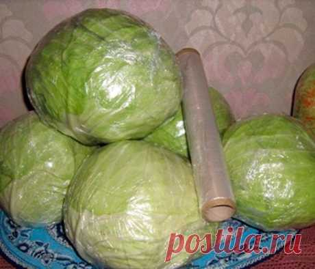 How to keep cabbage fresh till summer?