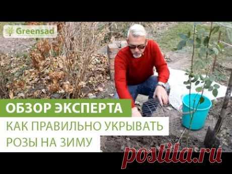 Как правильно укрывать розы на зиму - YouTube