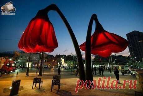 """Эти фонари """"расцветают"""", когда под ними встают люди. Иерусалим, Израиль."""