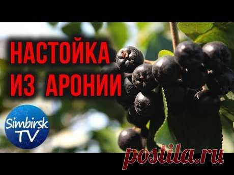 Как сделать настойку из черноплодной рябины. #SimbirskTV