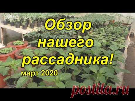 Наш рассадник в марте - что и как растёт на сегодня. Сравним?)))