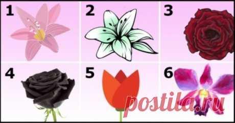 Выберите самый красивый цветок и узнайте свой характер