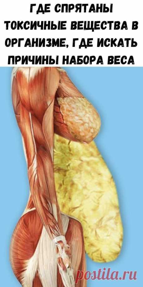 Где спрятаны токсичные вещества в организме, где искать причины набора веса - Стильные советы
