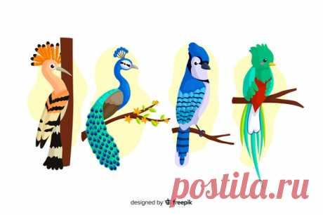 Descarga gratis Set de pájaros exóticos Descubre miles de vectores gratis y libres de derechos en Freepik