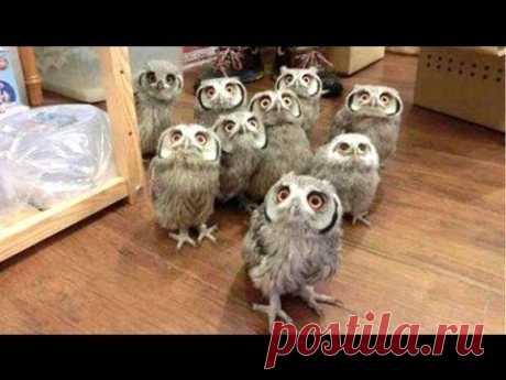 Очень смешное и милое видео с совами