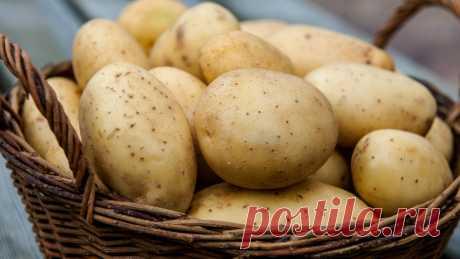 5-дневная картофельная диета: вкусно и полезно - cool-life.ru | cool-life.ru