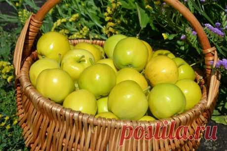 Вот, что я заготавливаю на зиму из яблок. Вкусный рецепт без сахара. Не сушу и не замораживаю, а хранится до следующего урожая. | Елена/НедОсолила | Яндекс Дзен