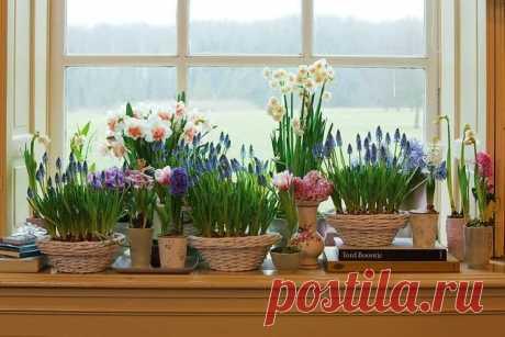 Лучшие цветы для выращивания живых букетов на подоконнике. Фото — Ботаничка.ru