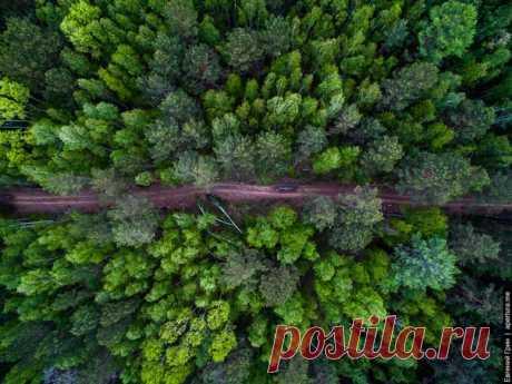 Сибирский лес. Автор фото — Greenjew