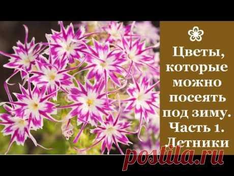 ❀ Цветы, которые можно посадить под зиму. Часть 1. Однолетники