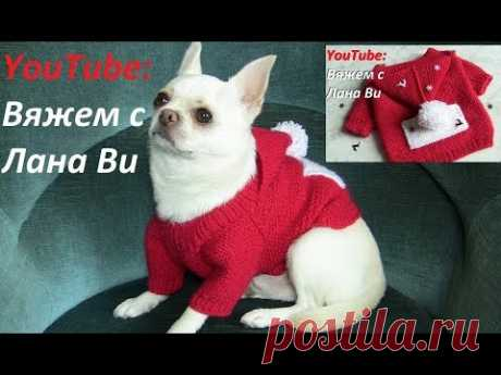 Sweater for a doggie. We knit for ANY size of a dog: raglan. DETAILED MK. Knitted clothes for dogs