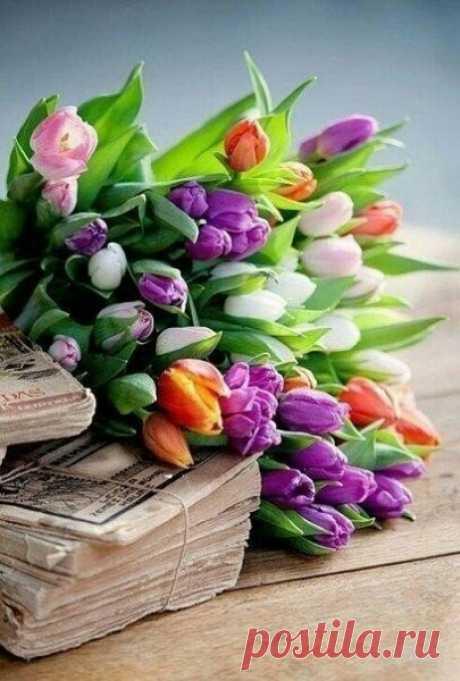 Тюльпаны - это дивные цветы, Кто раз увидел чары их познает. От всей непревзойдённой красоты, Душа и сердце просто замирают... (с)
