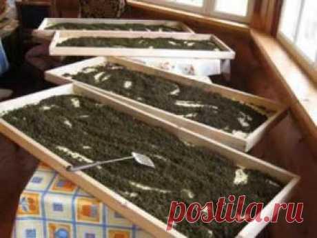 Как делать гранулированный иван-чай, видео от  Георгия Колганова