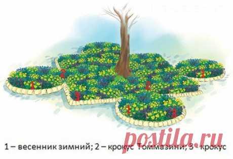 Примеры оформления приствольных кругов деревьев на участке — 6 соток