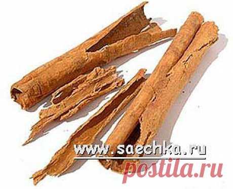 Корица | Saechka.Ru - рецепты с фото