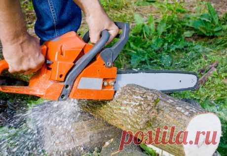 Как безопасно и правильно спилить дерево бензопилой