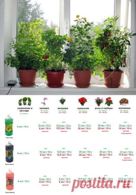 Советы по гидропонике   Питательный раствор для роз, орхидей, антариум, пуансетия, герберы, земляника, помидор, огурец, баклажан, салат-патук, базилик