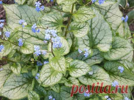 Какие цветы можно и нужно сажать осенью / цветы / 7dach.ru
