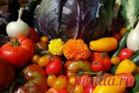 Удобрение из травы и сорняков | Выращивание томатов на дачном участке