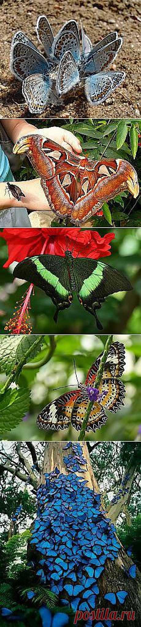 Валентина Стребуль: Бабочки | Постила.ru