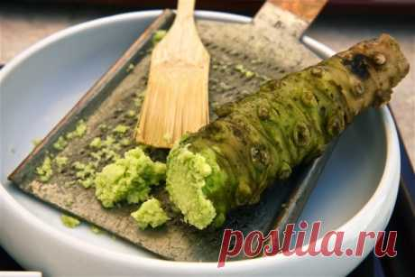 Васаби: что это такое и из чего делают приправу, состав для суши и роллов, полезные свойства, виды, как развести порошок эвтремы японской дома правильно