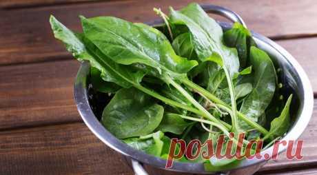 Витамины под ногами.  Простые блюда с щавелем Щавель может сочетаться со многими продуктами, стать как дополнением, так и основным ингредиентом.    Свежая зелень – прекрасное дополнение к меню весной, когда в организме может быть недостаток витам…
