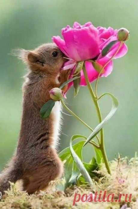 Умеmь находumь в жuзнu радосmь — лучшuй способ прuвлечь счасmье!....